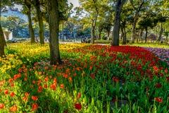 Variedad de tulipán imagenes de archivo