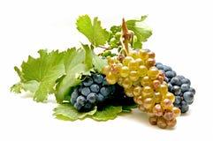 Variedad de uvas frescas Fotografía de archivo