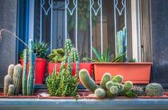 Variedad del cactus Fotografía de archivo libre de regalías