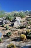 Variedad del desierto Imagen de archivo libre de regalías