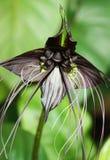 Variedad del negro de la flor del palo Foto de archivo libre de regalías