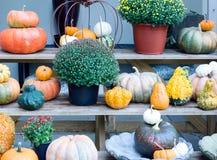 Variedad del otoño Imágenes de archivo libres de regalías