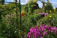 Variedad floral Imágenes de archivo libres de regalías