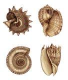 Variedade 1 do escudo Imagens de Stock