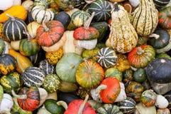 Variedade colorida das abóboras Foto de Stock