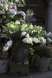 Variedade colorida de flores Fotografia de Stock