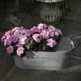 Variedade colorida de flores Fotos de Stock Royalty Free