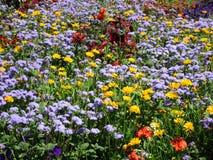 Variedade consideravelmente bonito de flores do jardim do verão em Stanley Park Perennial Garden, 2018 imagem de stock royalty free