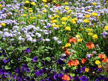 Variedade consideravelmente bonito de flores do jardim do verão em Stanley Park Perennial Garden, 2018 imagem de stock