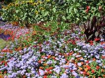 Variedade consideravelmente colorida de flores do verão em Stanley Park Perennial Garden, Vancôver, Canadá, 2018 fotos de stock