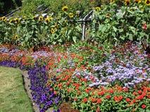 Variedade consideravelmente colorida de flores do verão em Stanley Park Perennial Garden, Vancôver, Canadá, 2018 fotografia de stock