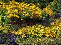 Variedade consideravelmente colorida de flores do verão em Stanley Park Perennial Garden, Vancôver, Canadá, 2018 fotografia de stock royalty free