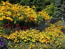 Variedade consideravelmente colorida de flores do verão em Stanley Park Perennial Garden, Vancôver, Canadá, 2018 imagem de stock