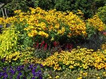 Variedade consideravelmente colorida de flores do verão em Stanley Park Perennial Garden, Vancôver, Canadá, 2018 foto de stock
