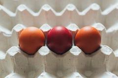 A variedade da cor diferente, fresca, galinha eggs em um fundo cinzento da bandeja Fotografia de Stock Royalty Free