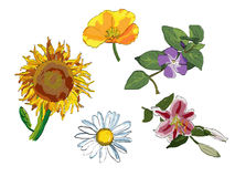Variedade da flor diferente ilustração stock