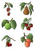 Variedade da fruta Fotos de Stock Royalty Free
