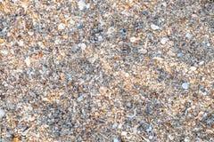 Variedade da vista superior de escudos do mar da praia fotografia de stock royalty free