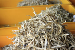 Variedade das anchovas Imagem de Stock Royalty Free