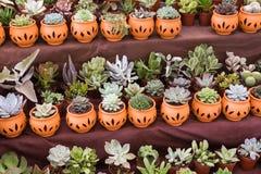 Variedade das plantas em uns vasos da argila Fotos de Stock