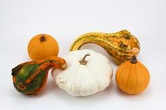 Variedade de abóboras diferentes isoladas em um fundo branco Fotografia de Stock Royalty Free