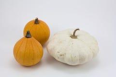 Variedade de abóboras diferentes isoladas em um fundo branco Imagem de Stock Royalty Free