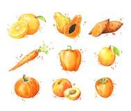 Variedade de alimentos, do fruto da aquarela e de vegtables alaranjados ilustração do vetor