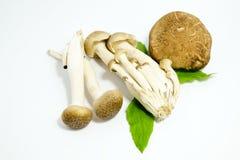 Variedade de cogumelos em um fundo branco Imagem de Stock
