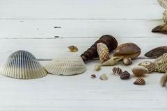 Variedade de conchas do mar, corais, shell, estrela do mar, no fundo branco fotografia de stock