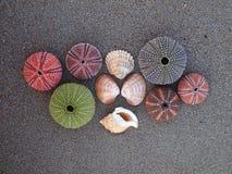 Variedade de escudos, de ouriços-do-mar e de moluscos do mar Fotos de Stock