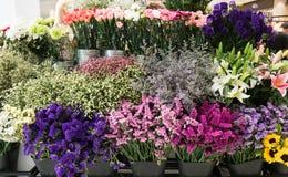 Variedade de flores Fotografia de Stock Royalty Free