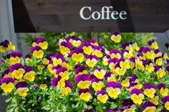 Variedade de flores coloridas no florista imagem de stock