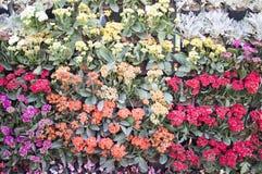 Variedade de flores e de plantas Imagens de Stock