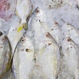 Variedade de marisco dos peixes frescos no fundo do close up do mercado Imagens de Stock Royalty Free