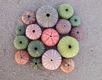 Variedade de ouriços-do-mar coloridos Foto de Stock