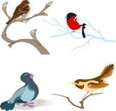 Variedade de pássaros Imagem de Stock Royalty Free