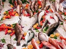 Variedade de peixes frescos Fotos de Stock Royalty Free