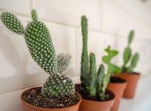 Variedade de plantas do cacto tais como microdasys do opuntia, em uns recipientes plásticos marrons contra um fundo bege da telha imagem de stock royalty free