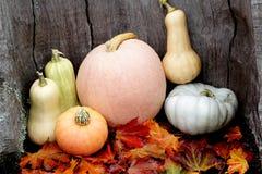Variedade diversa das abóboras Autumn Harvest imagem de stock