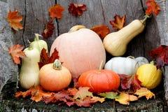 Variedade diversa das abóboras Autumn Harvest foto de stock royalty free