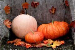 Variedade diversa das abóboras Autumn Harvest imagem de stock royalty free