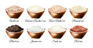 Variedade do arroz As ilustrações tiradas mão da aquarela ajustaram-se, isolado no fundo branco imagens de stock royalty free