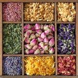 Variedade do chá secado foto de stock