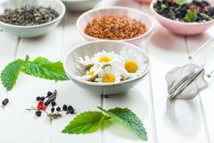 Variedade do chá seco Imagens de Stock
