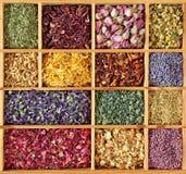 Variedade do chá secado Foto de Stock Royalty Free