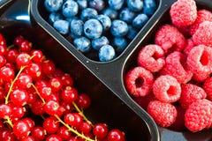 Variedade do fruto de baga Fotografia de Stock