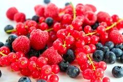 Variedade do fruto de baga Imagem de Stock Royalty Free
