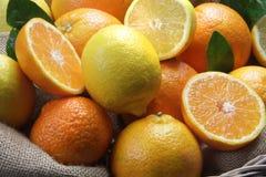 Variedade dos citrinos Fotografia de Stock Royalty Free