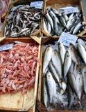 Variedade dos peixes fotografia de stock