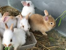 Variedade e coelhos pequenos coloridos Fotografia de Stock Royalty Free